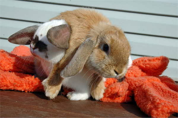 Funny animals of the week - 20 December 2013 (40 pics), cute bunny lift his brother