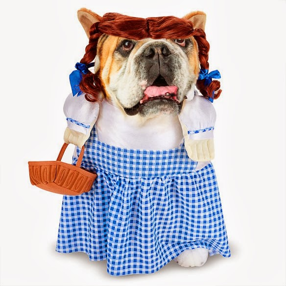 The CUTEST Halloween COSTUMES for DOGS 2013!  sc 1 st  BOLD and UNUSUAL DOG Stories - Haus Of Paws Blog & The CUTEST Halloween COSTUMES for DOGS 2013! | BOLD and UNUSUAL DOG ...