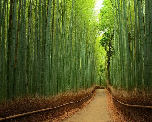 The Beautiful bamboo forest outside Kyoto, Japan