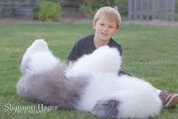 Shannon Hager Photography, Old English Sheepdog, Snowdowne