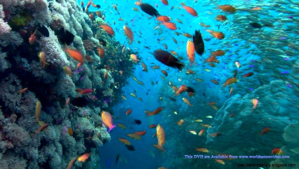 OCEAN DREAMING DVD   Relaxing Nature Scenes Of The Underwater