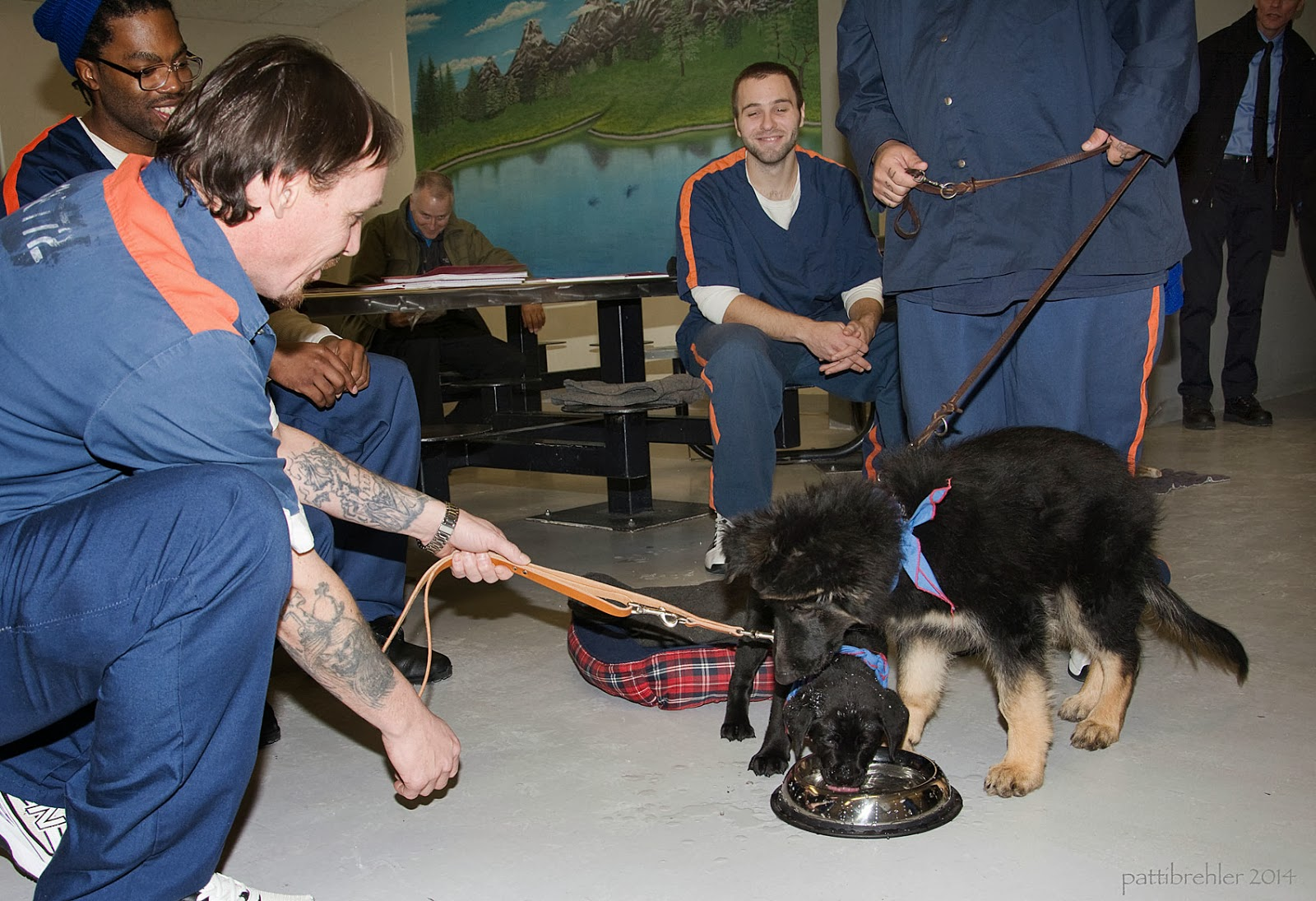 A black lab puppy and a larger german shepherd puppy are vying to get a drink from a stainless steel bowl on the floor. The two pups are held on leashs by two inmates dressed in the prison uniform - blue shirts and pants with orange stripes on the shoulders and legs. In the background are two more inmates sitting down smiling and watching.
