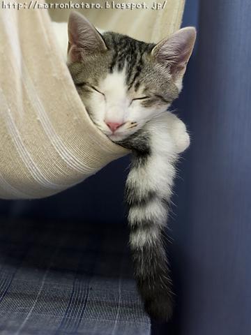 子猫の鍵尻尾
