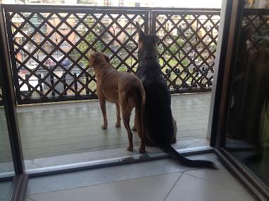 """""""Secondo te, quello laggiù è un gatto?"""""""