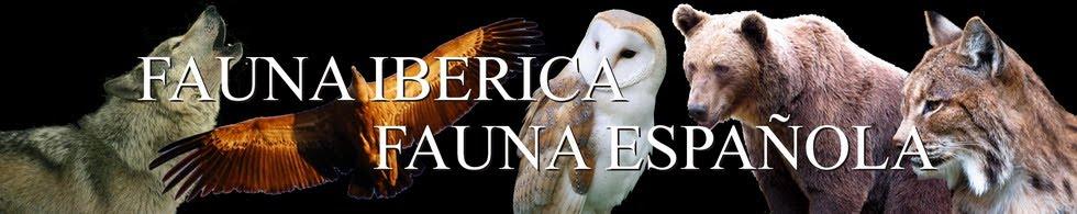 Fauna Ibérica - Fauna Española