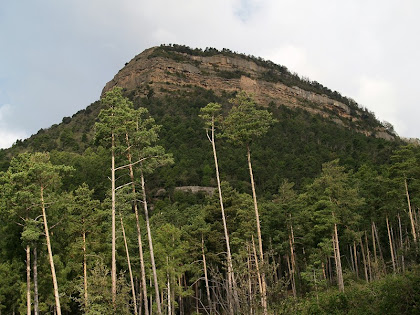 Sant Salvador i la baga del mateix nom amb pins rojalets força alts
