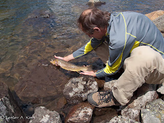 Releasing a big cutthroat trout at a 10,000 plus foot Beartooth Mountain lake