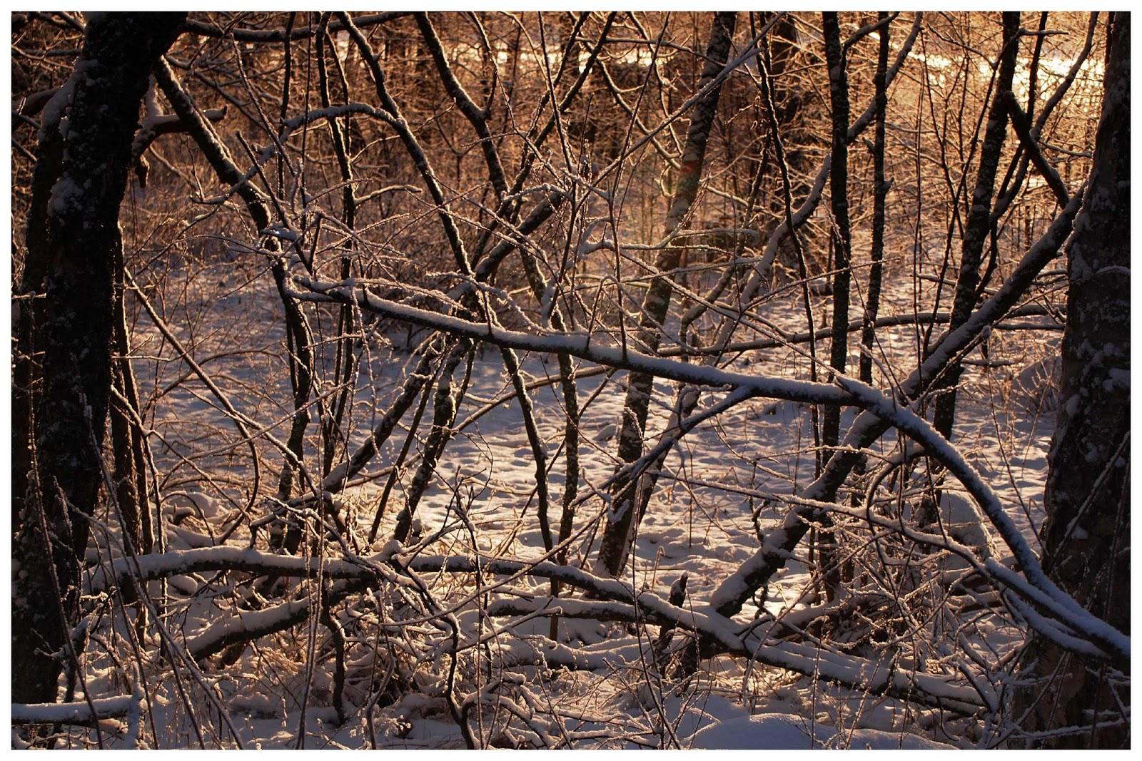 Winter branch4