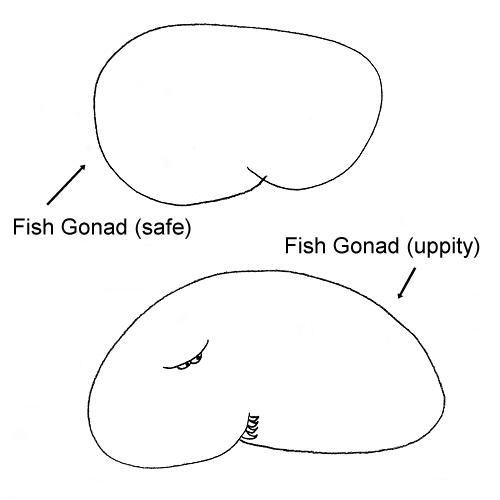 fish gonads - photo #44