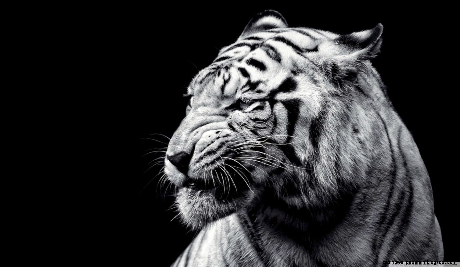 Simple Wallpaper High Resolution Tiger - tiger-black-and-white-hd-desktop-wallpaper-high-definition  Photograph_475858.jpg