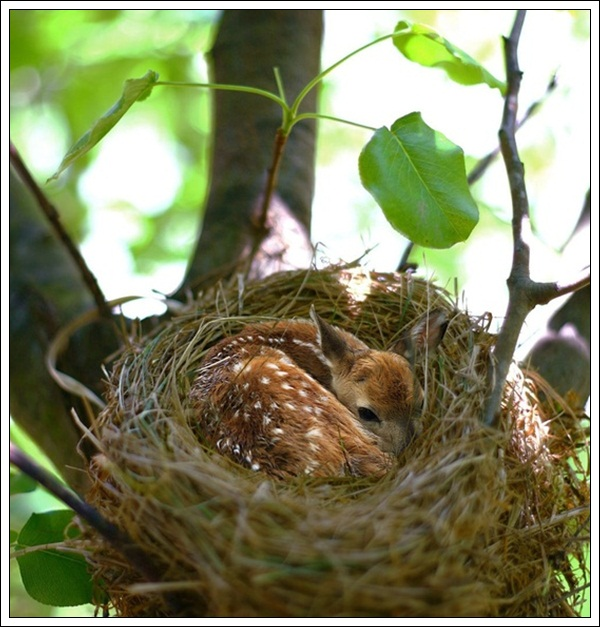 40 Beautiful Pictures Of Bird Nest Bored Art