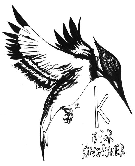 Line Drawing Kingfisher : Big dog s studio june