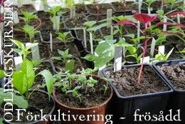 FÖRKULTIVERING/Frösådd