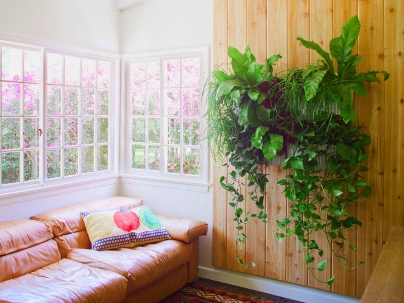 Jardins Verticaux et Jardins Intérieurs, Solutions Vertes pour les Appartements