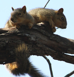 Baby squirrel on a tree limb. According to Coren's research, all infants dream more than adults.