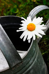 Trädgårdsbloggar med zonindelning