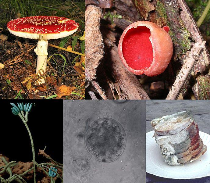 Seres Vivos del Reino Fungi