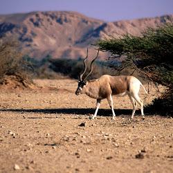 gambar afrika, wallpaper kehidupan binatang liar