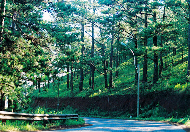 Dalat - City of thousands of pine trees