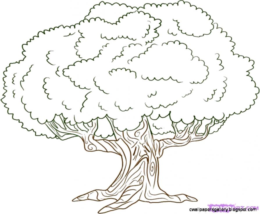 How to Draw an Oak Tree Step by Step Trees Pop Culture FREE