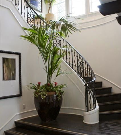 Multinotas decoraci n de interiores plantas ornamentales for Plantas para escaleras interior