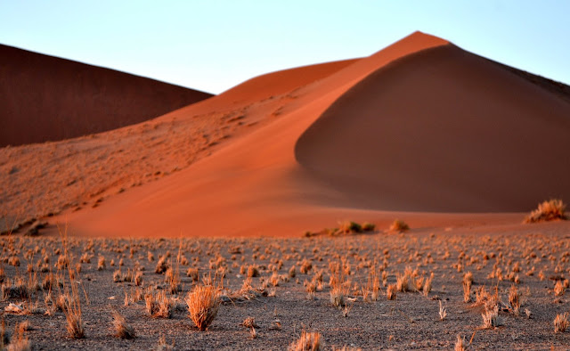 Grassy patches in front of sand dunes in Sossusvlei