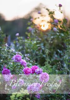http://blandrosorochbladloss.blogspot.se/2016/01/vintertradgard-blommig-fredag.html