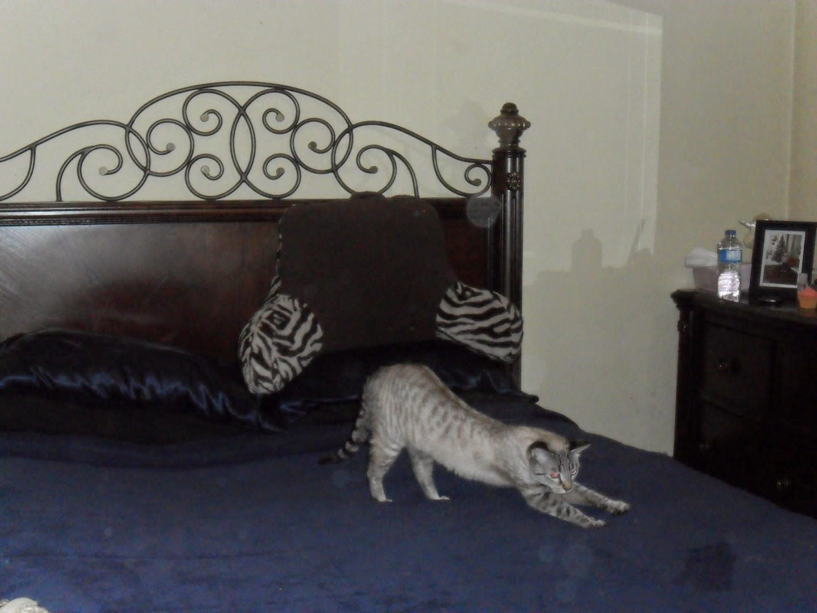 Bed Rest Zebra Print. Sleeping Partners Review.