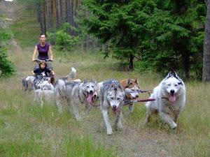 Wycieczki psimi zaprzęgami, warsztaty przyrodnicze  oraz prelekcje.