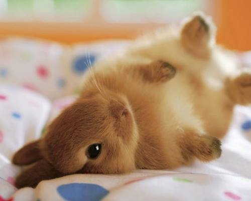 Cirugía Ortopédica Y Traumatologia En Conejos: Veterinario ...