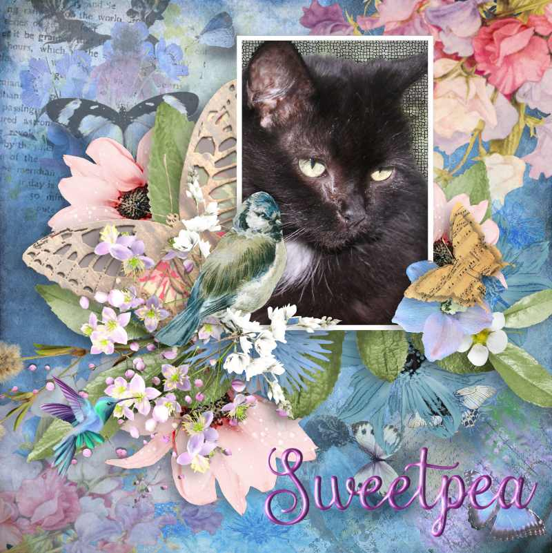 Angel Sweetpea