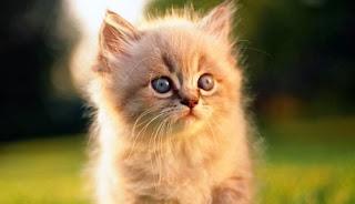 Kucing Jadi Sahabat Manusia Sejak 5300 Tahun Lalu