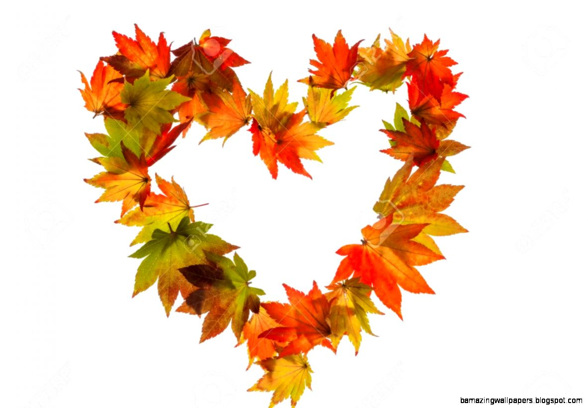 Autumn Leaves On A White Background In A Heart Shape Symbol For