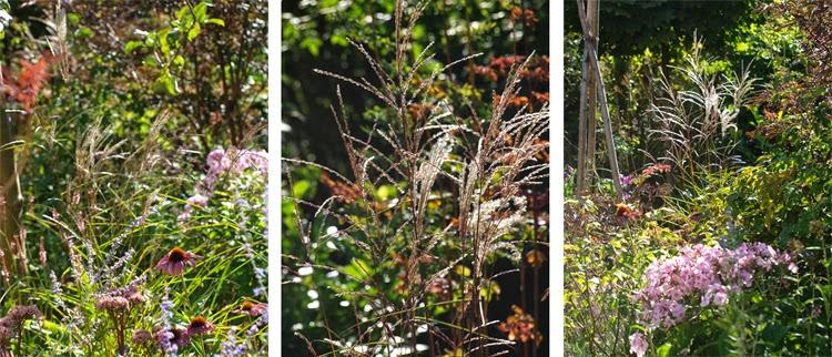 Brug græsser i staudebedet og opnå stor effekt i efterårsbedet