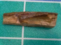 Fosil Kayu Jadi Batu