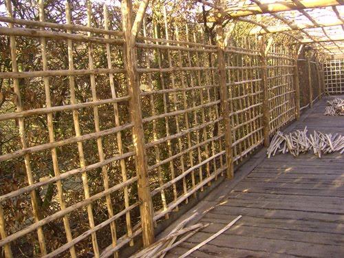 Le blog du jardinier du prieur d 39 orsan vitis claustras - Taille d un chataignier ...