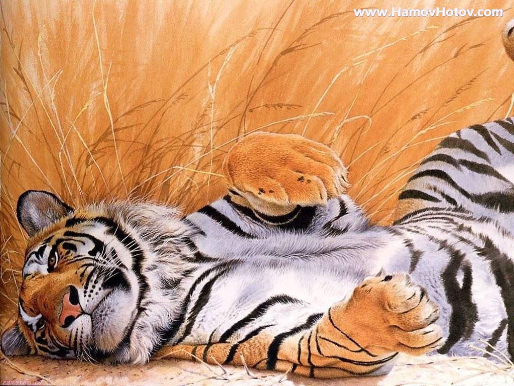 http://3.bp.blogspot.com/-4FCushyfYQA/UEiFvHrjK_I/AAAAAAAAA9I/tF7aieCCZXA/s1600/Animal+Wallpaper+Tiger+(5).jpg
