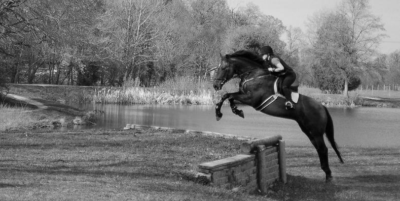 SAS Sport Horses