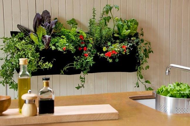 A Little Plants Decoration Design
