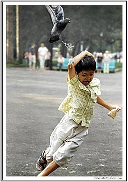 studioslera.com palomas