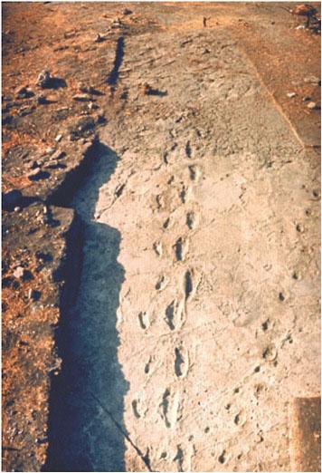 Laetoli - Million Year Old Hominin Footprints