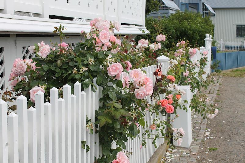 Hem & Harmoni: Blommor på Marstrand