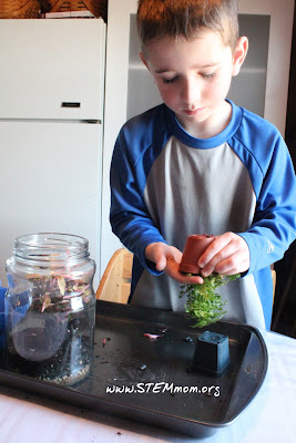 Teaching students how to handle small plants: STEMmom.org
