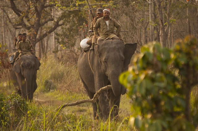 Manas National Park or Manas Wildlife Sanctuary is a National Park, UNESCO Natural World Heritage site, a Project Tiger Reserve, an Elephant Reserve and a Biosphere Reserve in Assam, India.