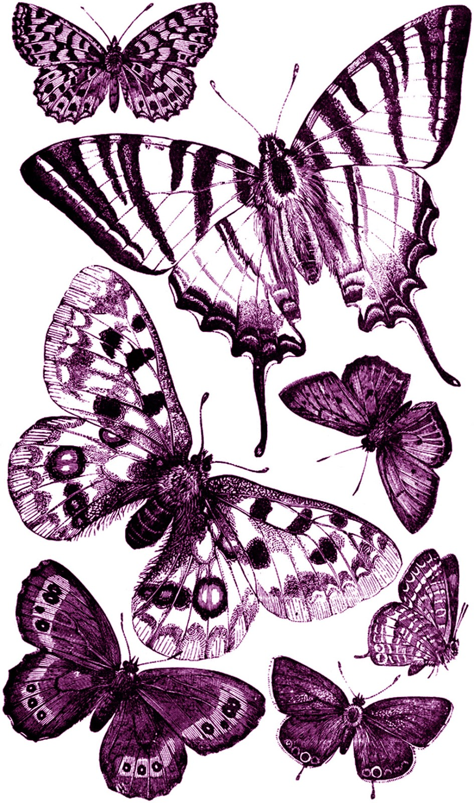 hot pink hi additionally  moreover  besides Amazing Butterfly moreover 0551d5559e1baf1ec1cd1342847dc68a further  also  additionally  as well How To Draw Butterfly together with Butterfly Free Clip Art 01 besides pencil 2Bdrawing 2Bbutterfly 2Bsketches 2Bwallpapers. on birds coloring pages flowers buterflies