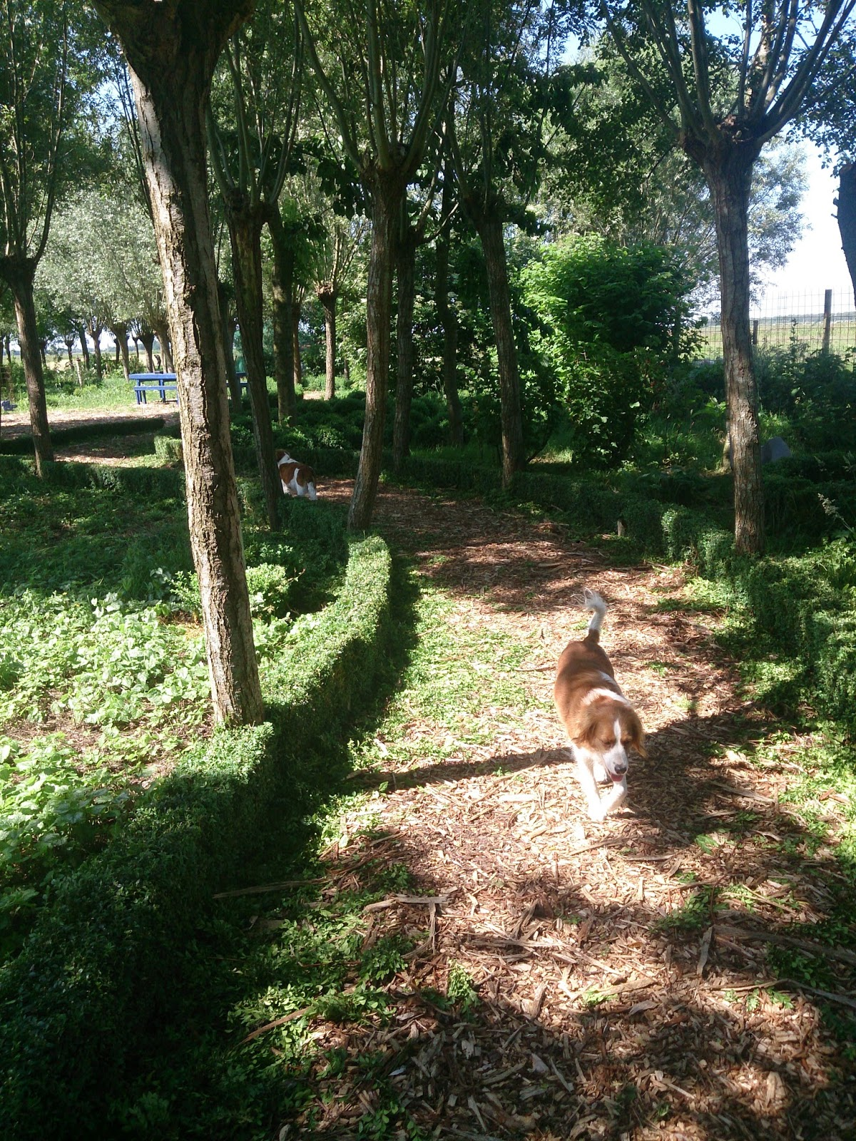 Collie collie: juni 2014