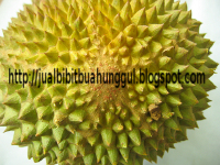 Jual bibit buah | bibit buah | agrobisnis | trubus | tanaman | pohon