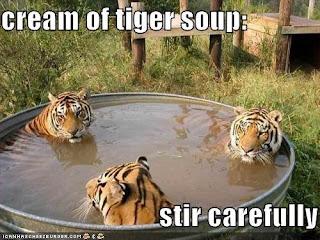 tigers in a bath