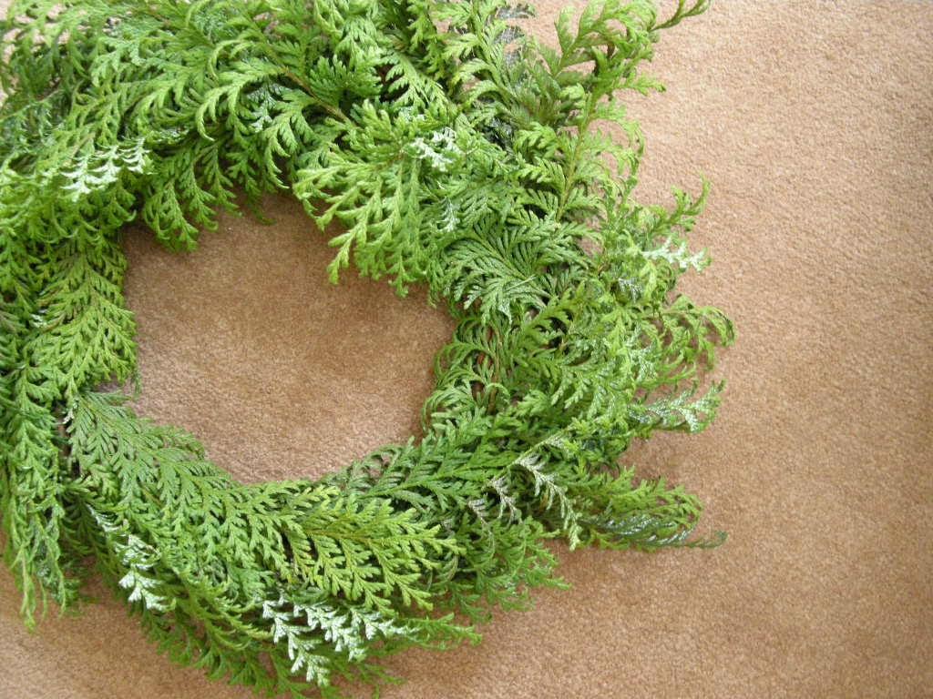 サワラ (植物)の画像 p1_21