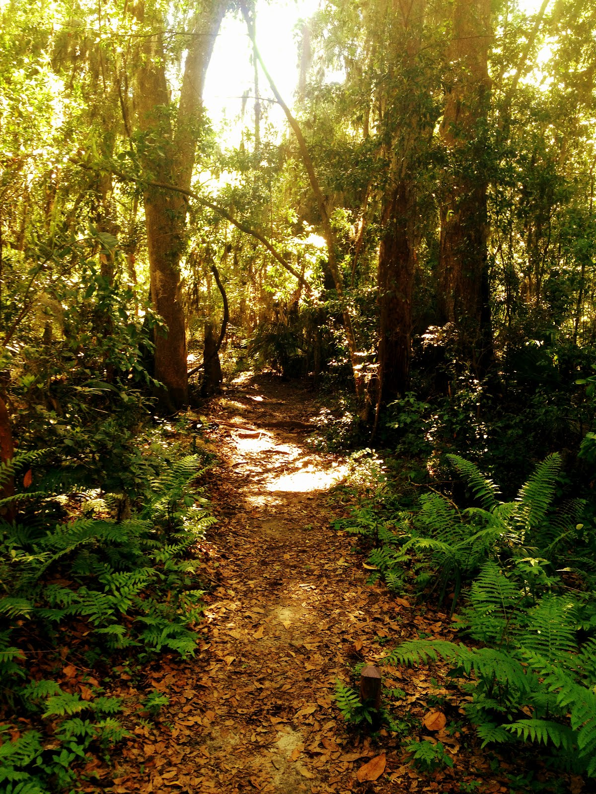 Finding adventure with ryan and brandy hiking at the - Jacksonville arboretum and gardens ...